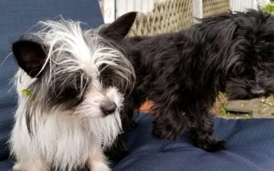 Meet Patches and Zippy-adoption pending