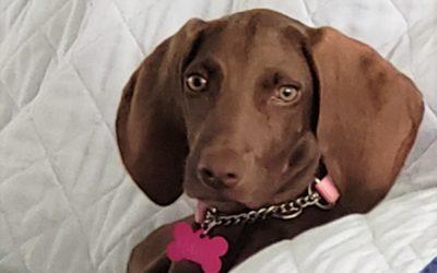 Meet Hallie