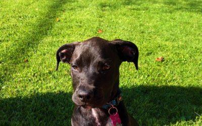 Chicagoland Dog Rescue | Home - Chicagoland Dog Rescue