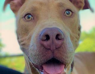 Meet Augie