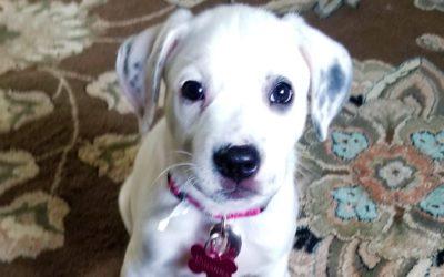 Meet Rhianna-adoption pending