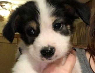 Meet Bowser