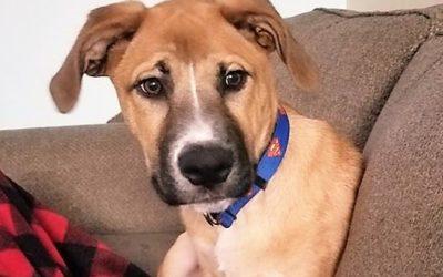 Meet Rocky-adopted