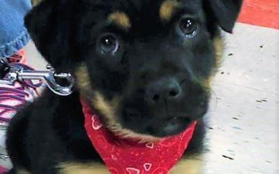 Meet Sierra-adopted
