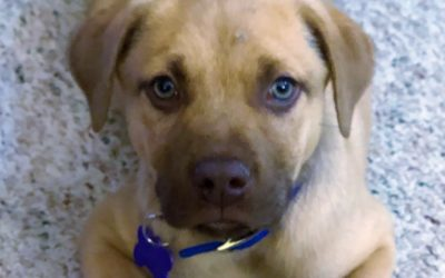 Meet Baylor-adopted