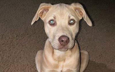 Meet Chelsey-adoption pending