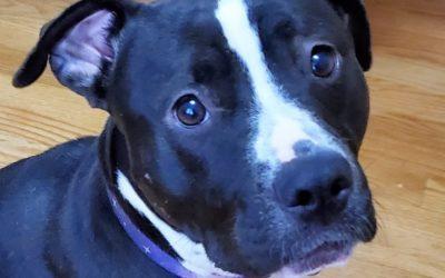 Meet Violet-adoption pending