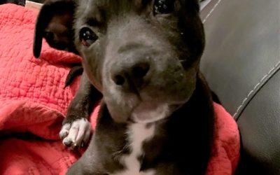 Meet Zara-adopted