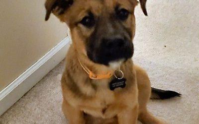 Meet Rosie-adopted
