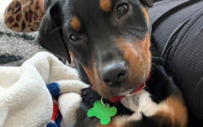 Meet Dutchess-adopted