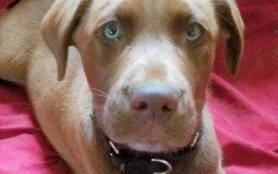 Meet Murphy-adopted