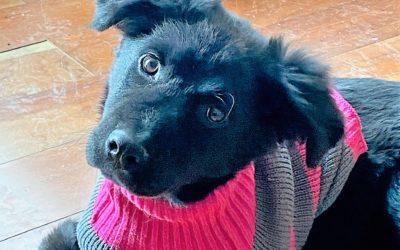 Meet Shadow-adopted