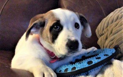 Meet Simone-adopted