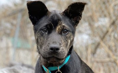 Meet Tilly-adopted