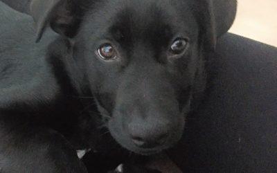 Meet Kona-adopted