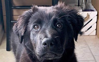 Meet Kya-adopted