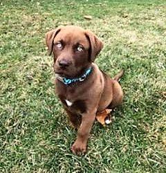 Meet Moose-adopted
