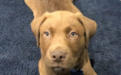 Meet Mulligan-adopted