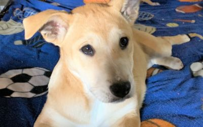 Meet Tassie-adopted
