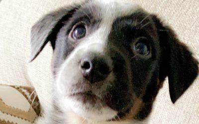 Meet Harvey-adoption pending