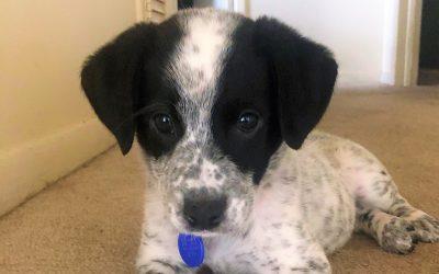 Meet Hedy-adoption pending