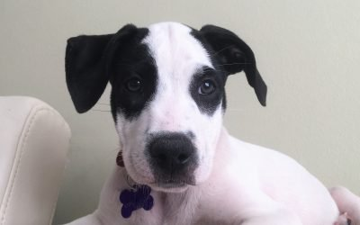 Meet Crosby-adopted