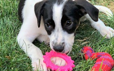 Meet Lark-adopted