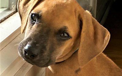 Meet Toffee-adopted