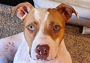 Meet Cora-adopted