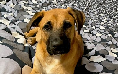 Meet Jack-adoption pending