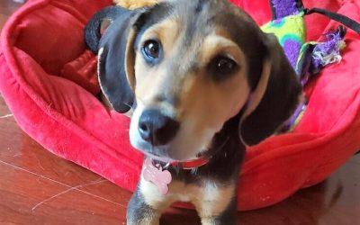 Meet Ernie-adopted