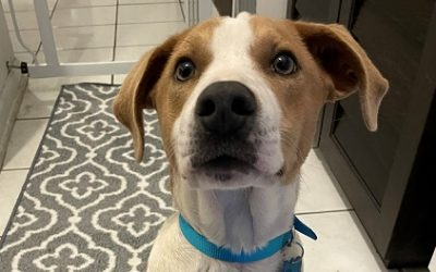 Meet Cali-adopted