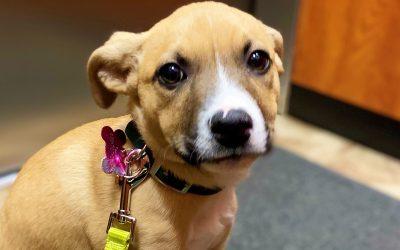 Meet Frizbee-adopted