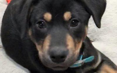 Meet Hobo-adopted