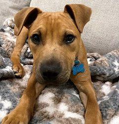 Meet Nash