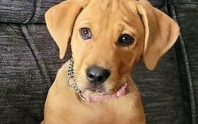 Meet Abby