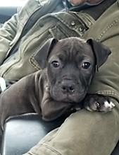Meet Betsy-adoopted