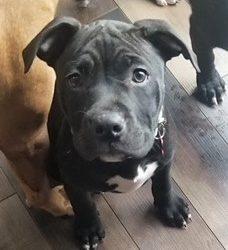 Meet Britton