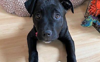 Meet Echo