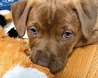 Meet Dollie-adopted