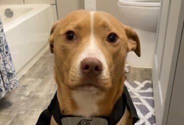 Meet Reese-adoption pending