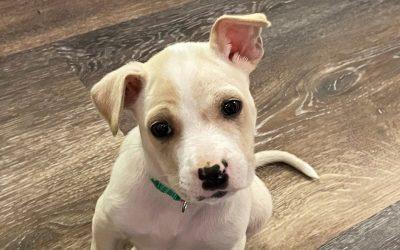 Meet Dudley