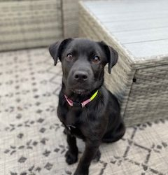 Meet Winnie