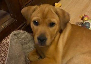 Meet Shelby