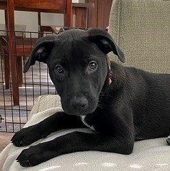 Meet Nyla