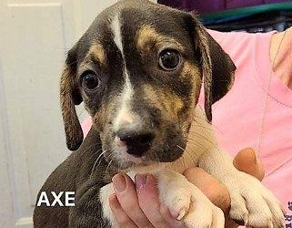Meet Axe -adopted