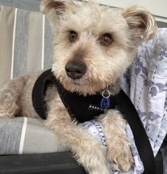 Meet Winston-adoption pending