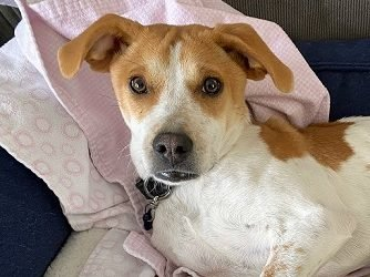 Meet Penny-I need a foster or furever home!