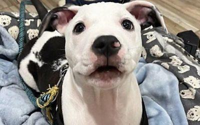Meet Coop-adoption pending