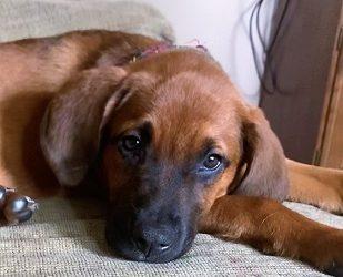 Meet Essie